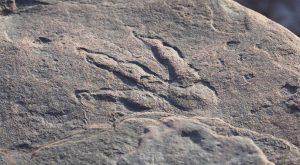 Dört yaşındaki Galli kız sahilde dinozor ayak izini keşfetti