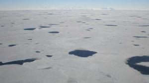 Antarktika'da Gizemli Canlılar Bulundu!