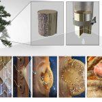 Prototip MIT filtresi, ağaç dallarını kullanarak arıtılmış içme suyu üretir