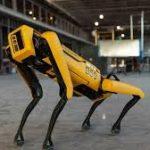 Fransız Ordusu tarafından keşif için savaş tatbikatında konuşlandırılan Boston Dynamics'in Spotu